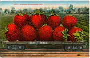 [Railroad freight car filled with gigantic strawberries]