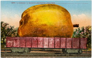 [Railroad freight car filled with giant apple]