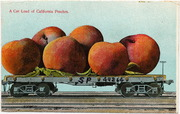 [Railroad freight car filled with giant peaches]