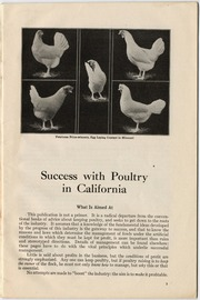 Success with poultry in California