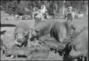 Couper's footage of Cal Poly in 1932