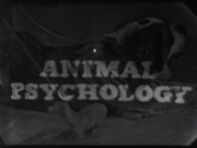 Science in Action: Animal Psychology